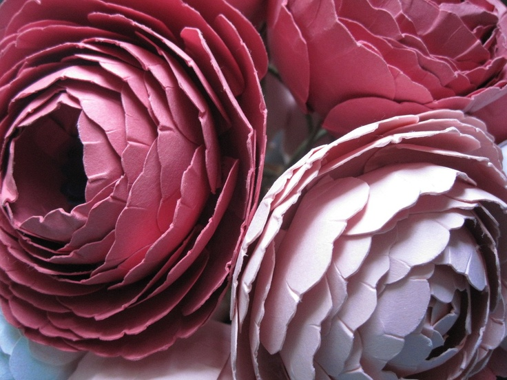 Ranunculus, Flower template and Paper on Pinterest
