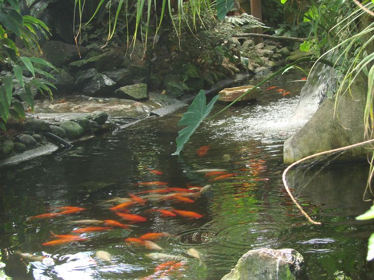 2567 best PONDS images on Pinterest Garden ideas Backyard ponds