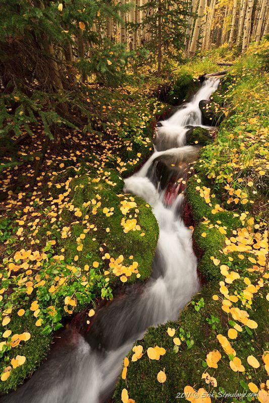 aspen, stream, leaves, moss, mossy, rocky mountain national park, USA i miss colorado.......boohoo