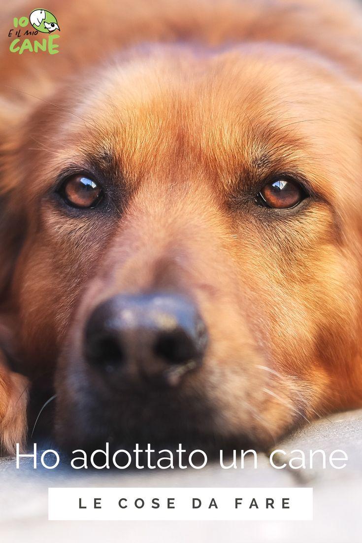 Hai appena preso un cane? Ecco che devi fare legalmente!
