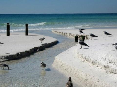 Fort walton beach swingers 'Fort Walton Beach big dick swingers blowjob' Search -
