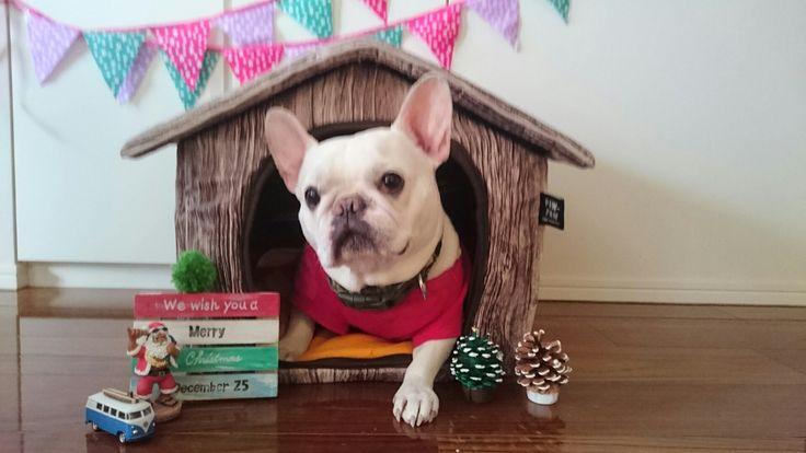 う~ちゃんのお部屋もクリスマス。
