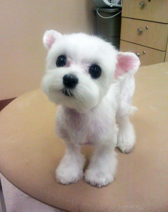 17 Best Images About Small Dogs On Pinterest Teddy Bear