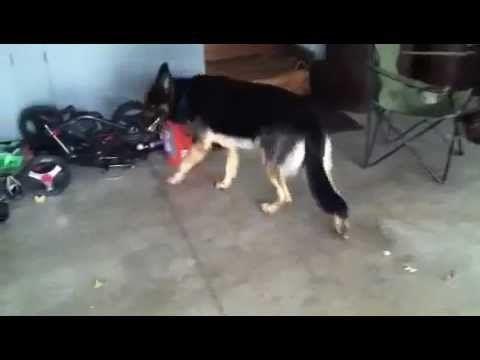 Grand Mal Seizure In Dogs - http://pets-ok.com/grand-mal-seizure-in-dogs-dogs-3415.html
