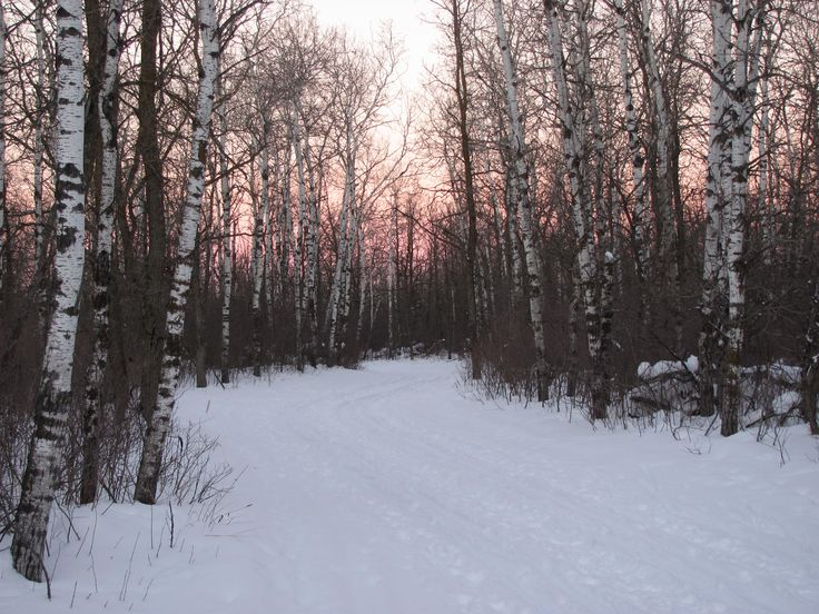 Sunset along the Chickadee Trail, Bird's Hill Provincial Park, MB