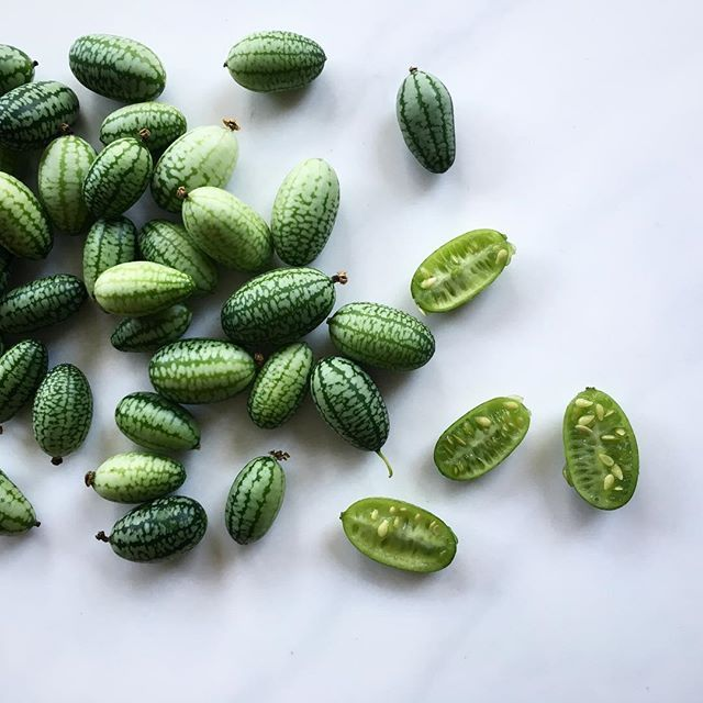 Have you ever seen cucamelons? A cross between a watermelon and a cucumber. 🍉🤗 got them from @wildcountry_organics #funnyfruit