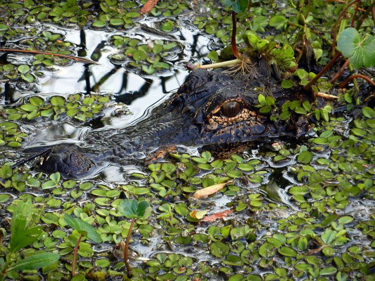 swamp houses louisiana   DSCN1262.jpg