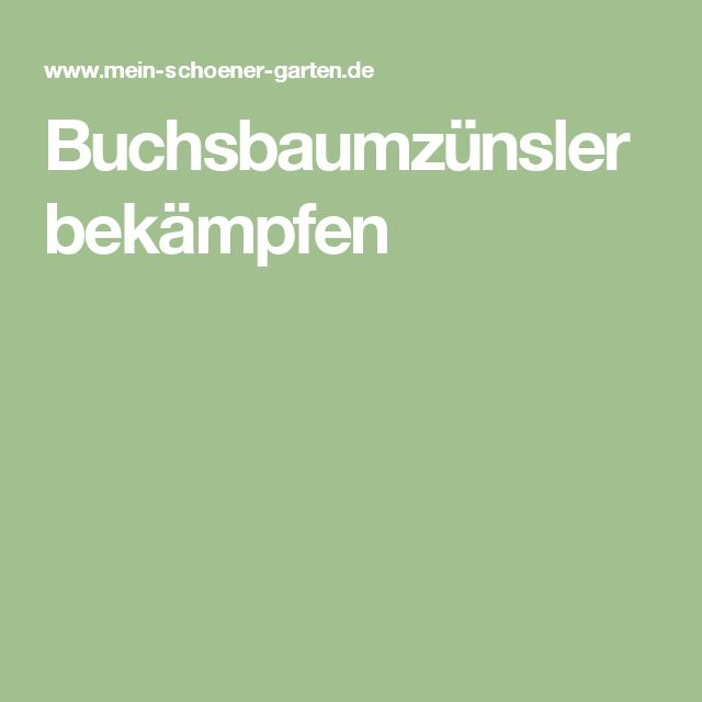 Superb Buchsbaumz nsler bek mpfen