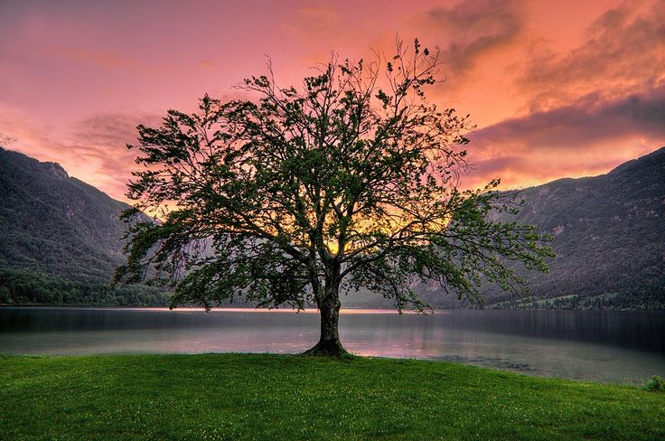 Tree at Lake Bohinj - This is a photograph taken at Lake Bohinj in Slovenia, Central Europe. I took this around sunset to take advantage of the soft light. The lake is wonderful and beautifully maintained.