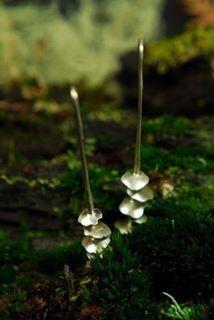 Aros oreja de palo Plata 950
