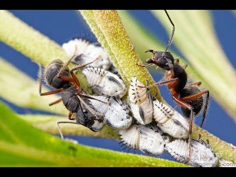 Controle de Formigas em Orquídeas - YouTube