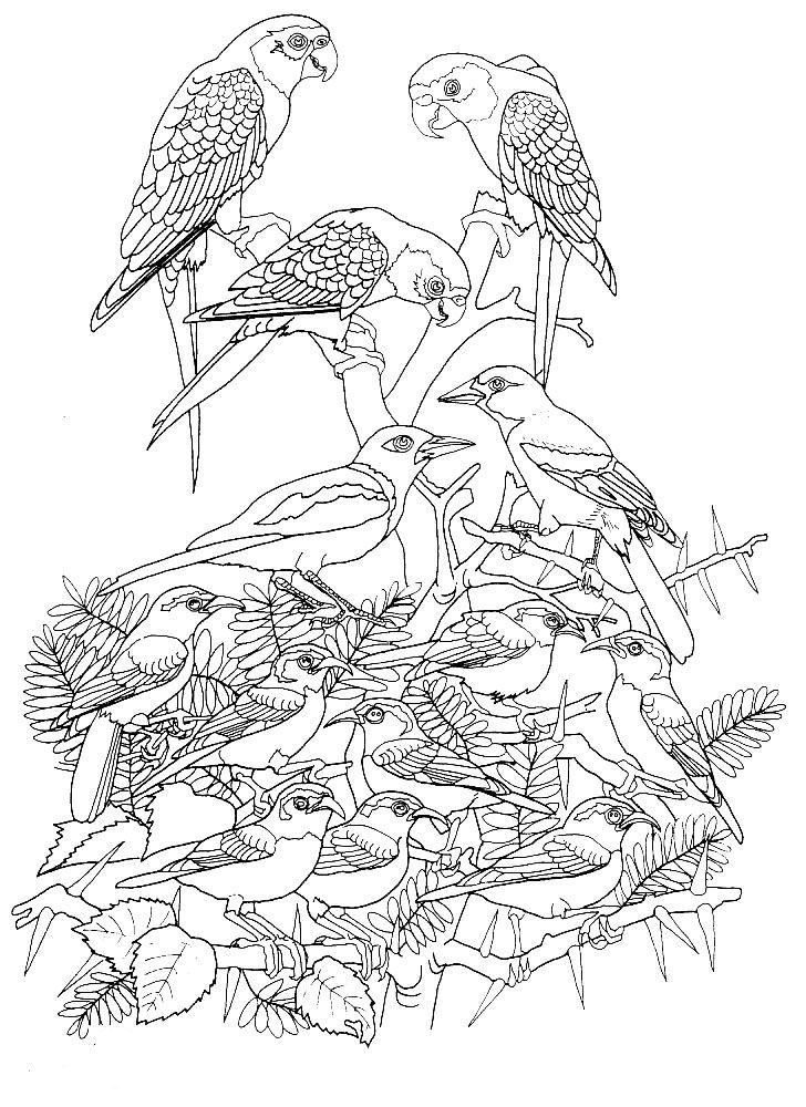500 best images about Birds Insects etc Coloring Pages on
