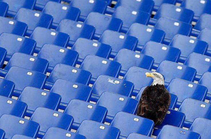 Einsamer Adler: Lazios Maskottchen im Olympiastadion zu Rom.
