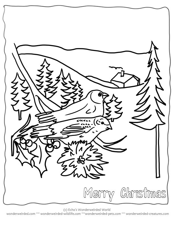 1000 ideas about Christmas Coloring
