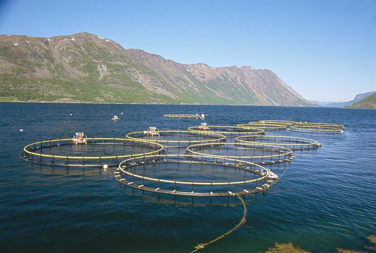 83 best fish feed machine for fish farm images on for Fish farming business