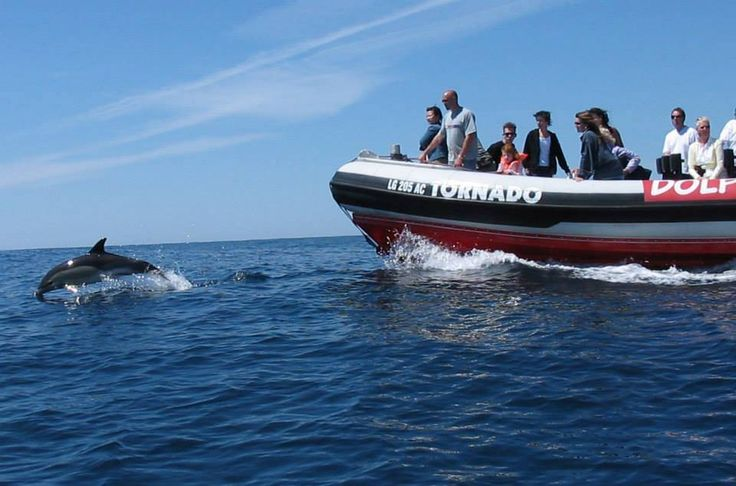 Dolphin watching from Lagos -Boat tours from Lagos - Dolphin watching tours Algarve