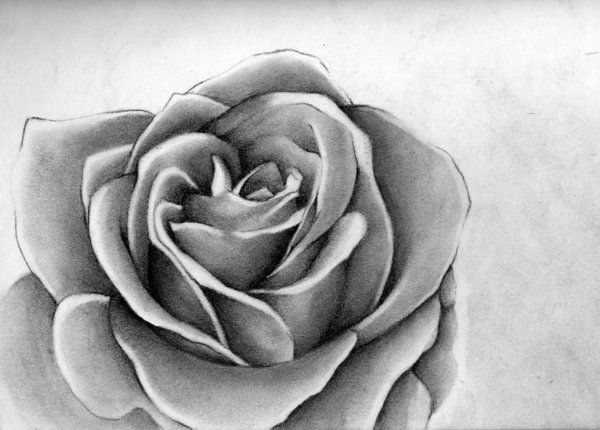10  Beautiful Rose Drawings for Inspiration, http://hative.com/rose-drawings/,