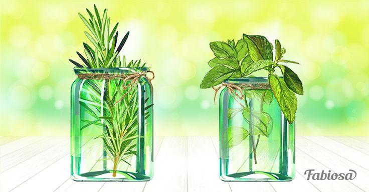 Estas poderosas hierbas aromáticas no necesitan tierra, te decimos cómo cultivarlas sólo con agua…