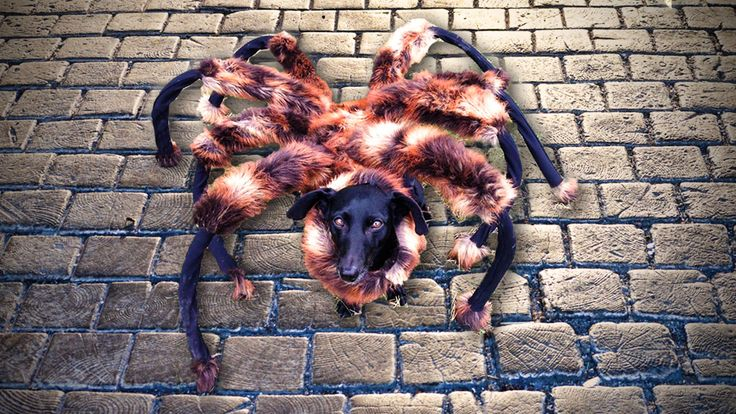 Mutant Giant Spider Dog is biggest trending video on YouTube in 2014