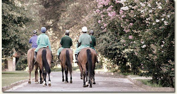 Horses walking on the Summerhill Estate - Hartford House, KZN Midlands Meander, www.midlandsmeander.co.za