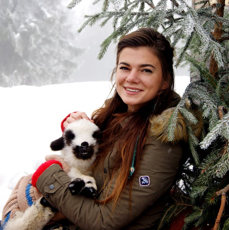 Polish culture, Polish mountain, sheep, mountains, nature, animals