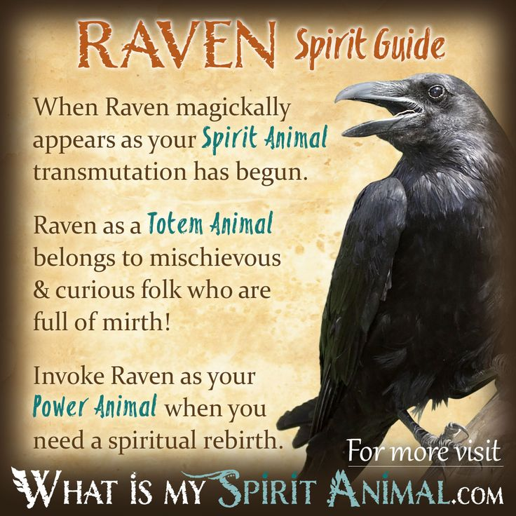 Raven Symbolism & Meaning | Spirit, Totem & Power Animal