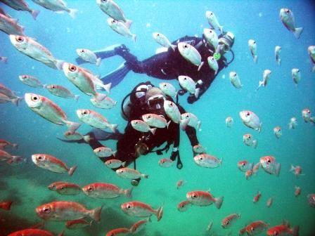 Pontos de Mergulho em Arraial do Cabo