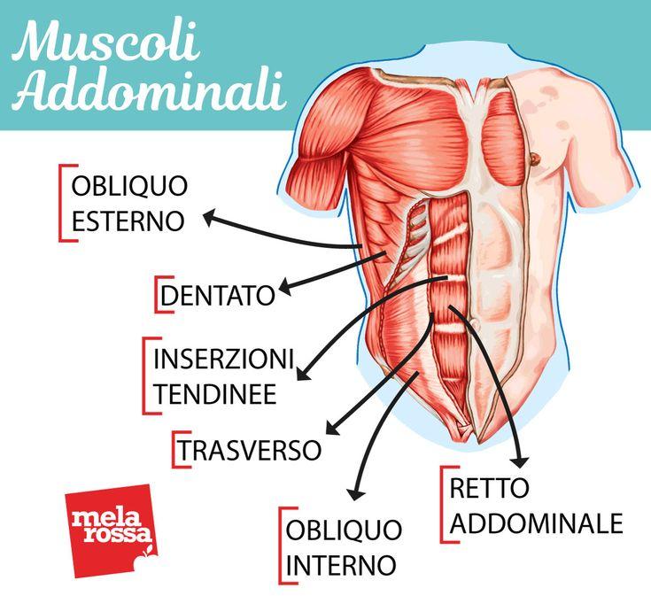 Großzügig Wiley Anatomie Und Physiologie 14. Ausgabe Fotos ...