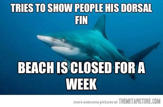 There's a shark...there's a beach...there's a shark by the beach! @Meghan Krane Krane Krane Fraser