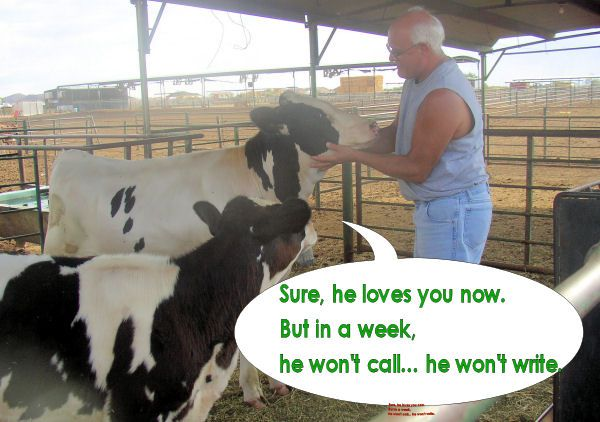 Raw Milk  - Farm Shop in QC, AZ Saturday mornings!!