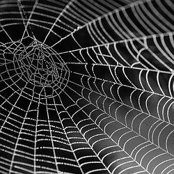Spinnenweb Met Water Kralen, Netwerk