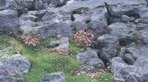 Resultado de imagem para campo de lapiás
