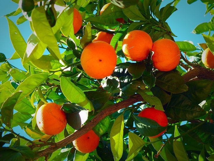 Appelsiini orange