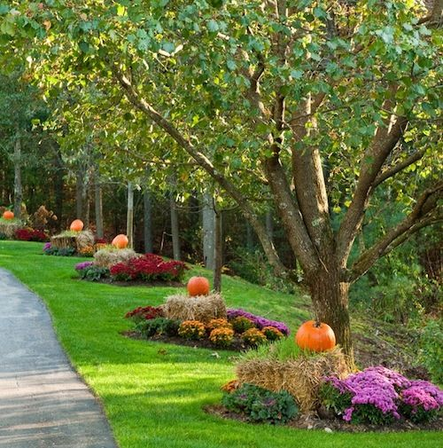 Fall Landscaping Tips 44 best beautification ideas images on pinterest | landscaping