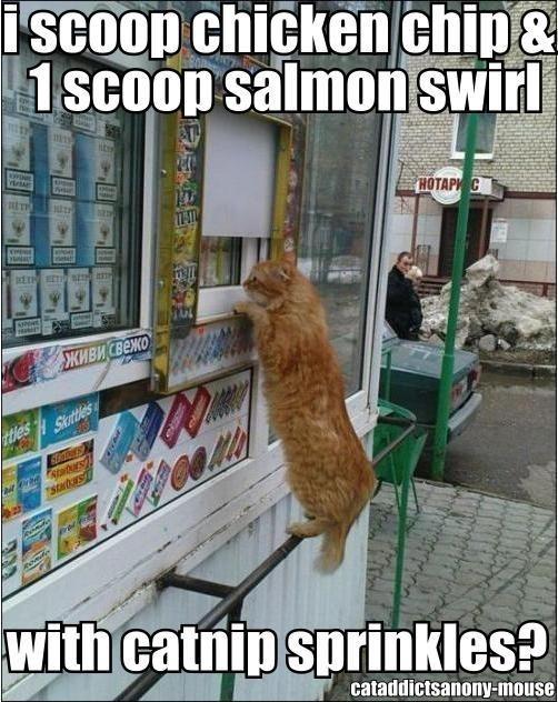 .: Funny Animals, Cat Humor, Funny Cats, Kitty Kitty, Crazy Cat, Ice Cream, Funny Stuff, Icecream, Cat Lady