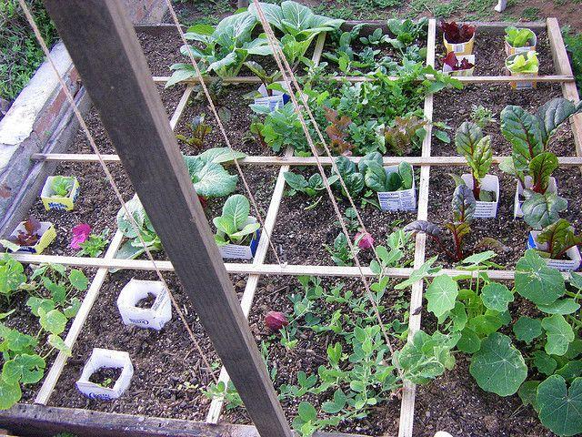 square foot gardening...