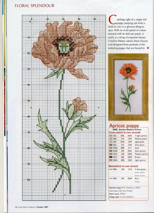 Gallery.ru / Фото #11 - цветы пробный - Len44ik