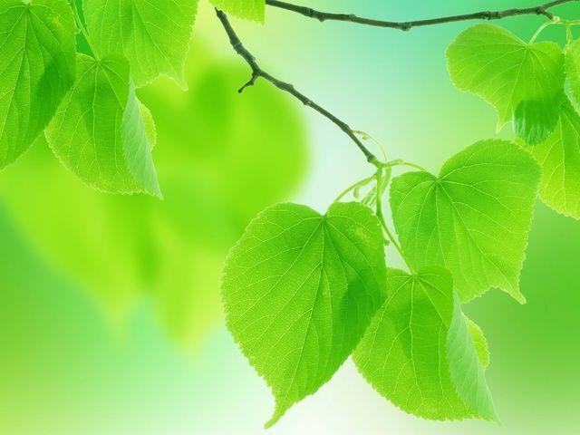 Зеленое платье великолепно вписывается в весенний и летний стиль, и нет ничего удивительного в том, что сезон весна-лето 2015 радует платьями всех оттенков зеленого. Настоящим открытием нового сезона станет оттенок зеленого, романтично названный дизайнерами, «цвет богомола». Цвет богомола — яркий, почти неоновый оттенок. Великолепно подходит для модных купальников и летних летящих с…