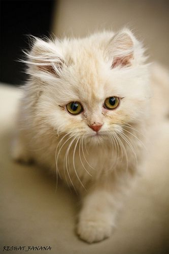 That little kitten is so cute look at its little eyes and fur!