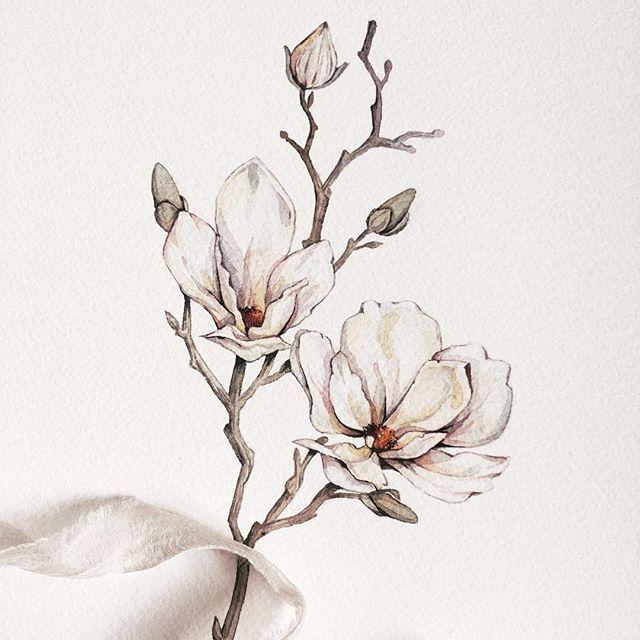 Magnolia Painting Fine Art Paintings Watercolor Painting Watercolor Art Watercolor Flowers Chinese Painti Chinese Painting Flowers Art Floral Drawing