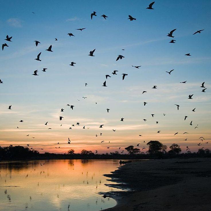 Apesar de ocupar menos de 2% do território brasileiro, o Pantanal é a maior extensão úmida contínua do planeta. Infelizmente, menos de 5% do bioma é protegido por unidades de conservação. A Reserva Particular do Patrimônio Natural (RPPN) Sesc Pantanal é um exemplo. Localizada no município de Barão de (MT), próximo a Cuiabá, a reserva tem como objetivos: preservar ecossistemas e a biodiversidade local além de proporcionar uma base para pesquisas científicas. Foto: Haroldo Palo Jr…