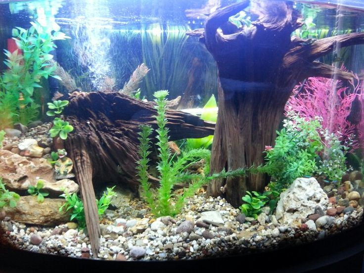 Nice piece of driftwood new setup in the 36 gallon for Spacearium aquariums