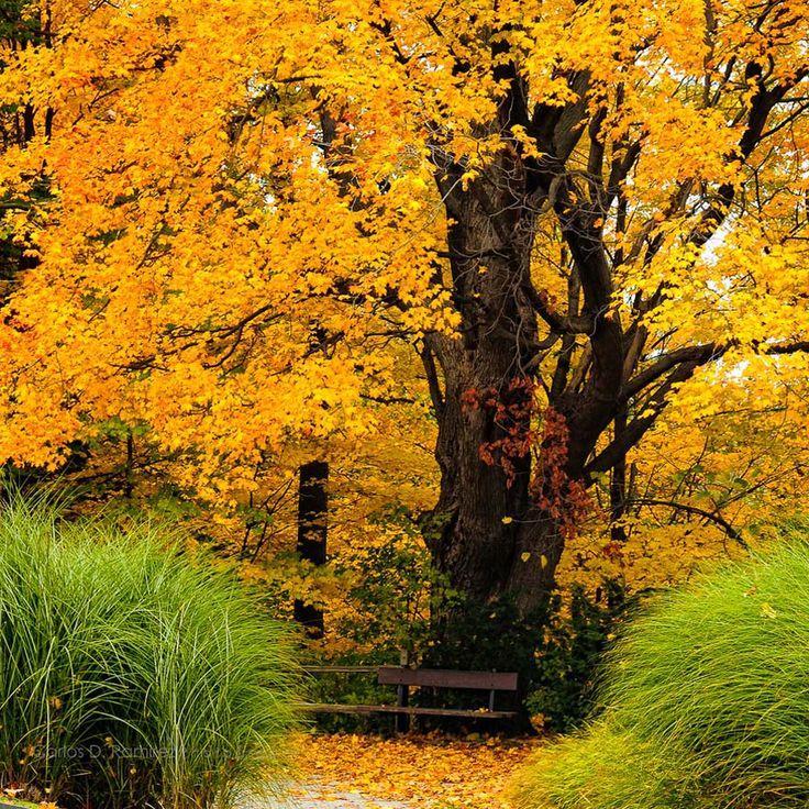 Autumn in Canada. By Carlos D. Ramirez