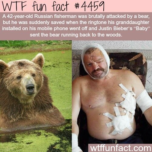 They say it was so bad that it made the bear deaf from Justin Bieber 's high pitched voice