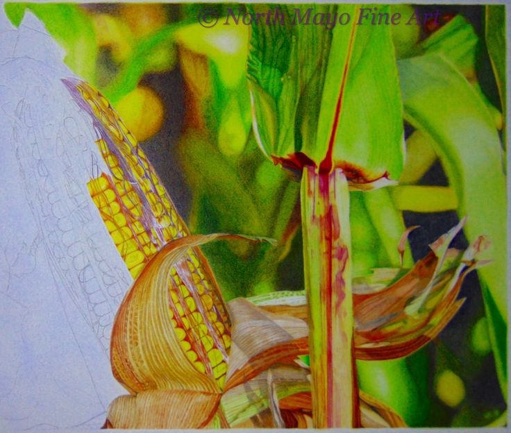 'The Dulcet Tones of Autumn' WIP 12. I'm progressing well through the corn