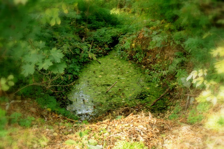 Heart of the nature)
