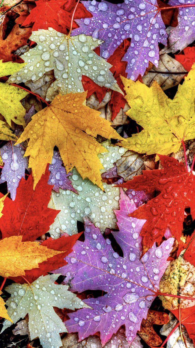 Imgur Desktop Wallpaper Fall Autumn Leaves Wallpaper Fall Wallpaper