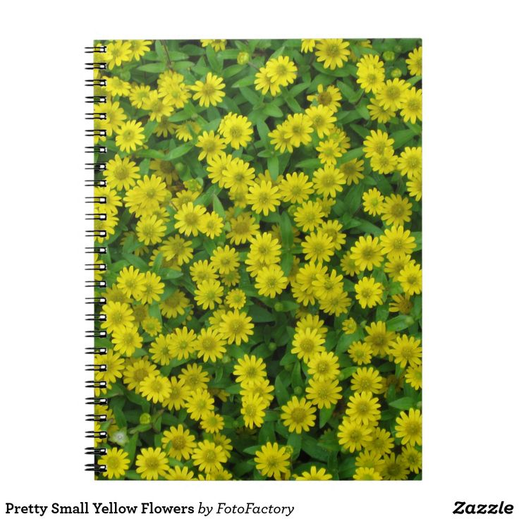Pretty Small Yellow Flowers Notebook Pretty blanket of small yellow wildflowers.