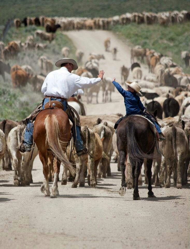 Cattle drive...it is definitely a team effort! High five lil britches!