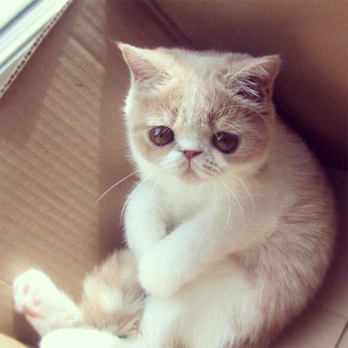 "catsbeaversandducks:    ""Do I have to leave the box?""  Photo/caption via That Cute Site"